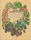 Купить книгу Бородачева, Л.Д. - Рабочие таблицы по уходу за плодовыми и ягодными культурами