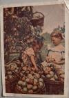 цветное фото М. Хорунжего - Девочки собирающие груши