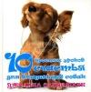 Джоанна Сандсмарк - 10 простых уроков счастья для владельцев собак