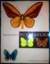Купить книгу J. Moucha - Красивые бабочки. Beautiful butterflies /